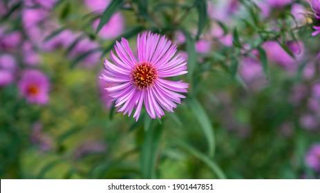 Spring flowers. Wiosenne kwiaty na łące - Shutterstock ID 1901447851