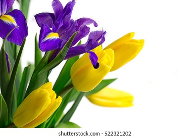 Spring flowers - yellow tulips and blue irises. isolation