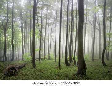 Spring foggy forests of Balkan Mountains, Bulgaria