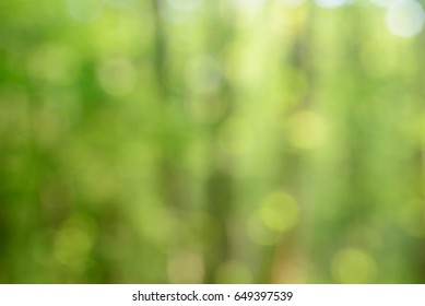 spring forest blurred background