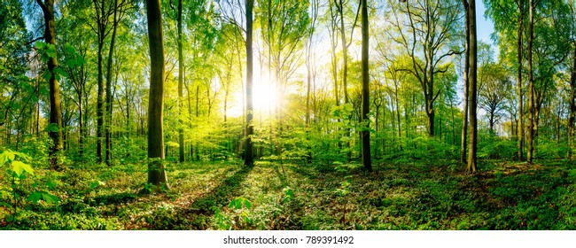 Spring in the forest with bright sun shining through the trees