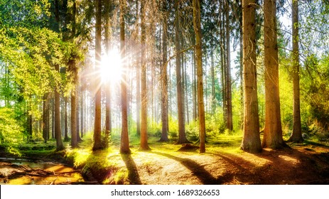 Spring forest with brook and bright sun shining through the trees
