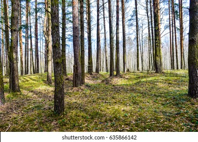 Spring forest day landscape. Panoramic forest trees background