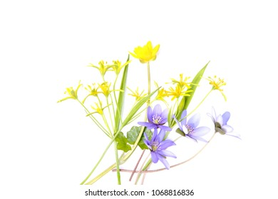 Spring forest flowers isolated on white background. Small, yellow and blue, wild flowers on white.