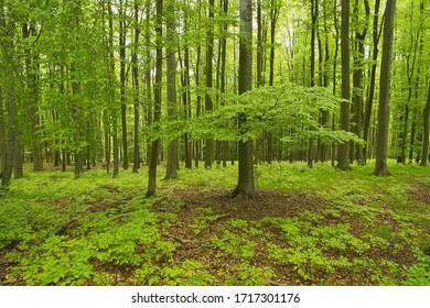 Spring forest full of trees with new green leaves, fresh green color