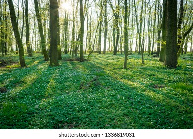 Spring in a forest in Germany