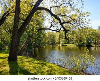 Spring forest lake landscape view. Forest lake shore in spring forest. Spring forrest lake landscape. Spring forest lake landscape