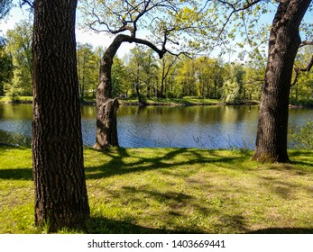 Spring forest lake trees landscape. Forest lake trees in spring forest. Spring forest lake trees view. Spring forrest lake trees landscape