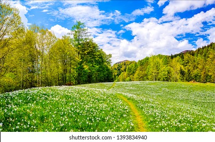 Spring forest meadow flowers landscape. Forest meadow flowers landscape. Forrest meadow flowers in spring. Springtime forest meadow flowers view