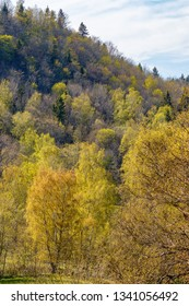 Spring forest at a mountainside