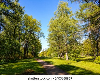 Spring forest path landscape view. Forest path in springtime blooming. Spring bloom forest path landscape. Spring forrest path view