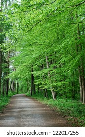 Spring Forest / Photo of green spring forest and walking path, Germany, Europe