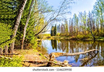 Spring forest river landscape. Forest river in springtime. Fallen tree river forest scene