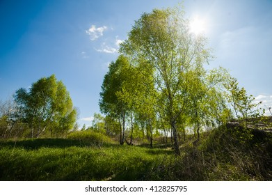 spring in the forest. sunny day