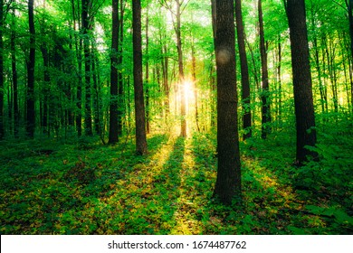 spring forest trees. nature green wood sunlight backgrounds. - Shutterstock ID 1674487762