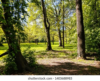 Spring forest trees sunlight view. Spring forrest trees in sunny day. Spring forest trees landscape. Spring forrest trees view