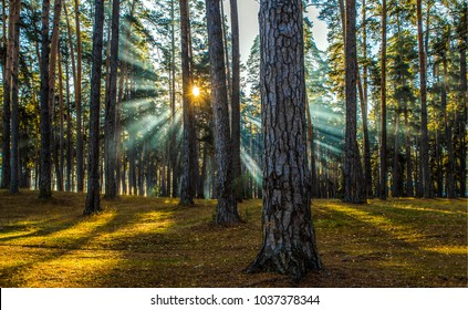 Spring forest trees view sunlight panoramic landscape
