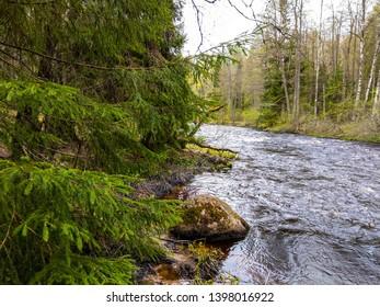 Spring forest wild river shore. Forest wild river in spring. Deep forest rver view. Spring forest river landscape