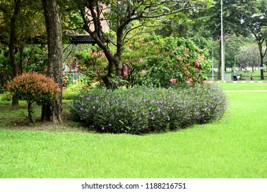 Spring Formal Garden. Beautiful garden of green plant. Landscaped Formal Garden. Park. Beautiful Garden.