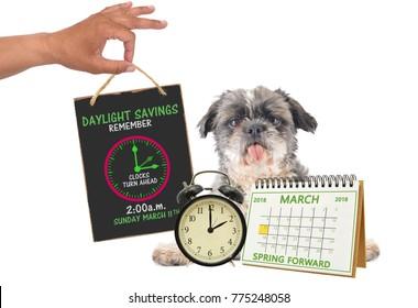 Spring Forward Daylight Savings March 2018 Calendar 2 o'clock alarm clock Shih Tzu dog sticking out tongue looking at camera white background