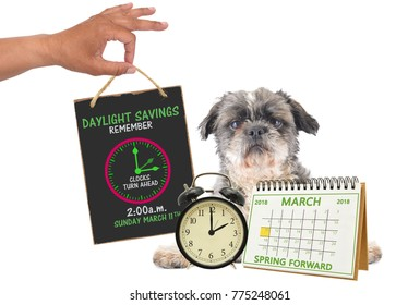 Spring Forward Daylight Savings March 2018 Calendar 2 o'clock alarm clock Shih Tzu dog looking at camera serious face white background