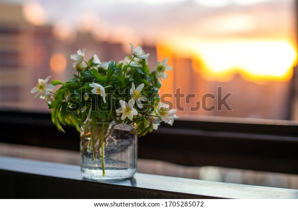 Spring fragrant snowdrops in a glass vase on a sunset background