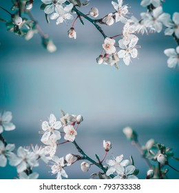 Spring frame background with white cherry blossom on blue background, place for text. Floral springtime nature
