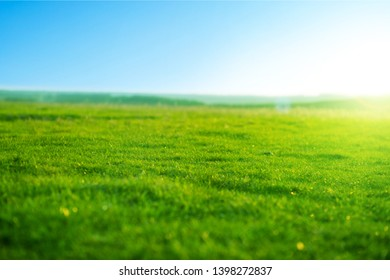 Spring fresh bright green grass at sunset on a warm sunny day. Beatiful morning green field with blue heaven
