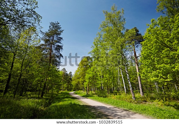 Spring fresh forest, with bright juicy colors. A dirt path in the city park for walks in the springtime, against the background of the blue sky.