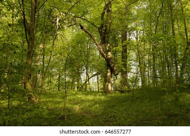 spring fresh green forest, sunny day