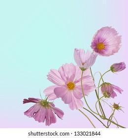 Spring garden beautiful flower.Nature border