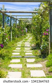 Spring garden and flowers framed by a wooden timber pergola of poles and climbing roses of white and purple colours with white flagstones set as a path or pathway with the rear of a woman disappearing