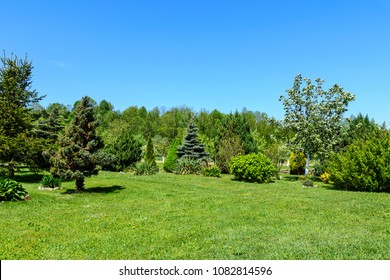 Spring garden landscape - green lawn, coniferous trees and fruit trees against the blue sky on a sunny day.