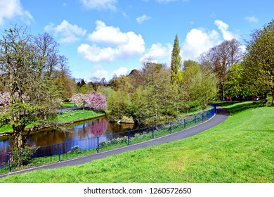 Spring garden with a pond and blossomed trees