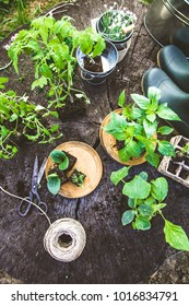 Spring garden. Seedlings in soil. Garden tools and equipment. Gardening boots
