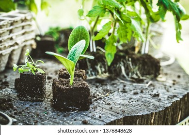Spring garden. Seedlings in soil. Garden tools and equipment