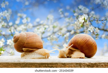 spring garden snails closeup flowering cherry background