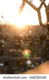 spring garden tree flowering branches