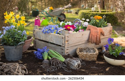 Spring: Gardening in autumn with flowers of primula, hyacinth and forget-me-not.