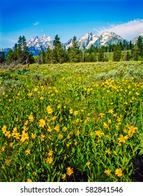 Spring in Grand Teton, Wyoming