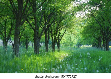 Spring grass between the trees