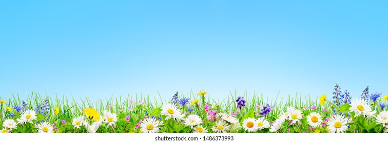 spring grass and daisy and chamomile flowers natural background