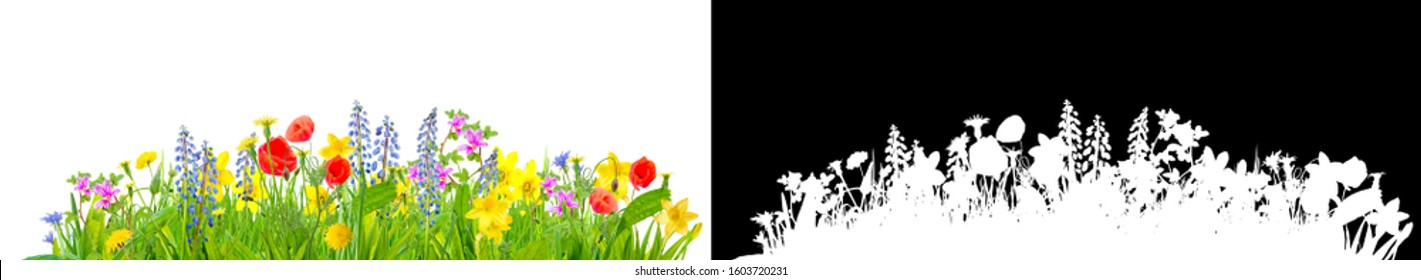 spring grass and flowers isolated with clipping path for easy isolation