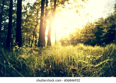 Spring grass in forest against of sunshine