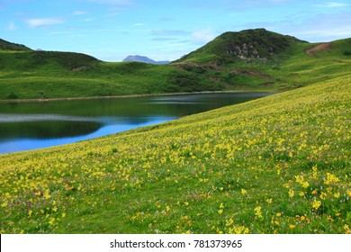 spring grassland with flowera and lake