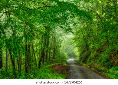 Spring green along Fayette Station Road, New River Gorge National River, Fayette County, West Virginia, USA