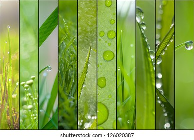 Spring green collage