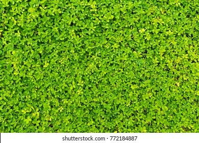 spring green fence made of leaves. Abstract Nature background