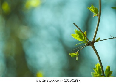 Spring green forest with lush foliage