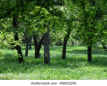 Spring Green Forest. Nature Beautiful Landscape. Park with Green Grass and Trees. Tranquil Background